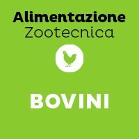 Bovini