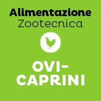 Ovi-Caprini