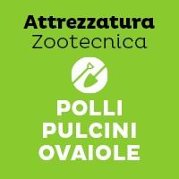 Polli-Pulcini-Ovaiole